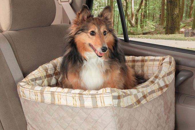 How to Buy the Best Dog Car Seat
